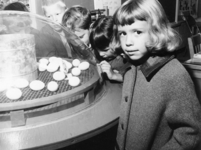 "In 1968, one of the top commercial attractions of the State Fair of Oklahoma was the ""see-through"" incubator in the Farm Bureau exhibit. Thousands of people came through the display to get their first glimpse of a chick hatching. In the following months, the incubator was taken to numerous schools to educate children about the egg-hatching process."