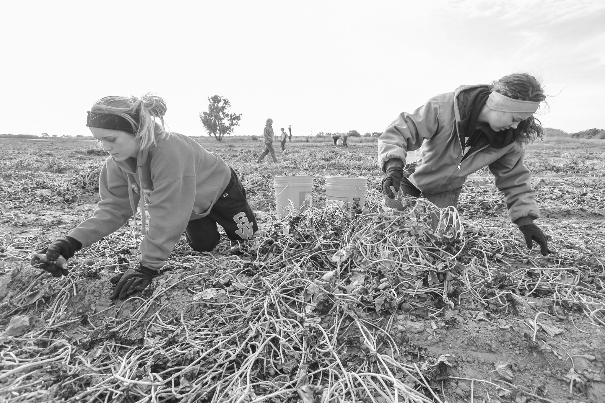 In 2013, a Hydro-area farmer had leftover sweet potatoes in a field that did not fit size requirements for harvest. OKFB coordinated an effort to bring in volunteers from the surrounding community and beyond to harvest the remaining sweet potatoes for donation to the Regional Food Bank of Oklahoma. OKFB members, such as Caddo County member Brittany Krehbiel (right) along with volunteers from local schools and members of the Oklahoma Agricultural Leadership Program descended on the field to fill buckets with the bounty of tubers for needy families.