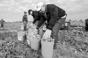 OKFB President Roland Pederson helps collect sweet potatoes for donation to the Regional Food Bank of Oklahoma in 2013.